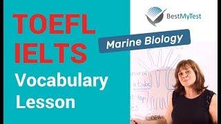 TOEFL Vocabulary - Marine Biology Lesson 1