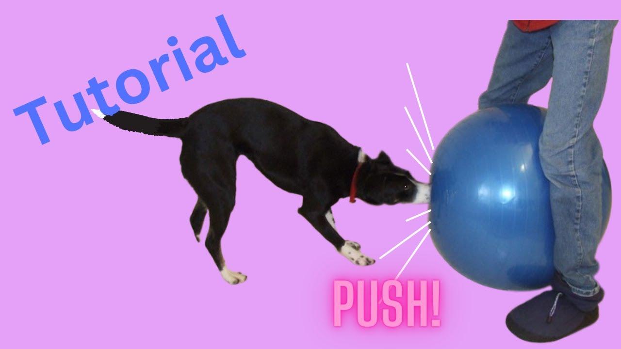 Herding Dog Training Video