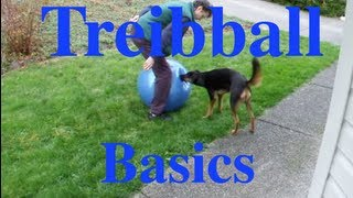 How to Teach The Basics of 'Treibball' or 'Push Ball': A Great New Game for Energetic Dogs!
