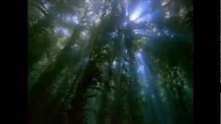 Liquid Babylon - Beneath Blue Waves