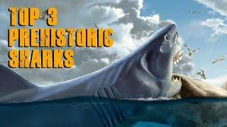 Top 3 Prehistoric Sharks