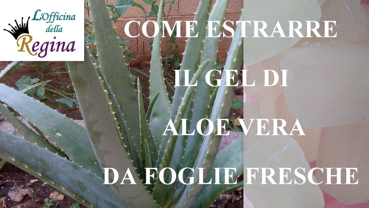 Come Mangiare l'Aloe Vera: 15 Passaggi (con Immagini)