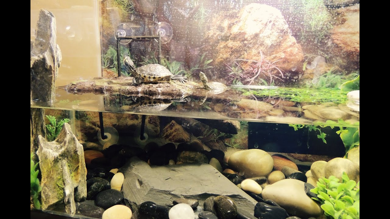Turtle Tank Decor 10 Gallon Turtle Tank Youtube