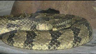 'Rattlesnake Island' proposal suspended indefinitely