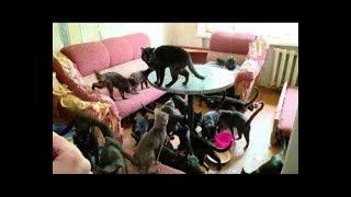 В квартире 40 кошек
