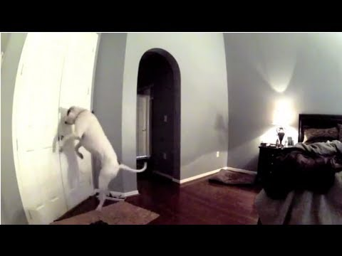 Hidden Camera on Smart Dog! Hilarious!