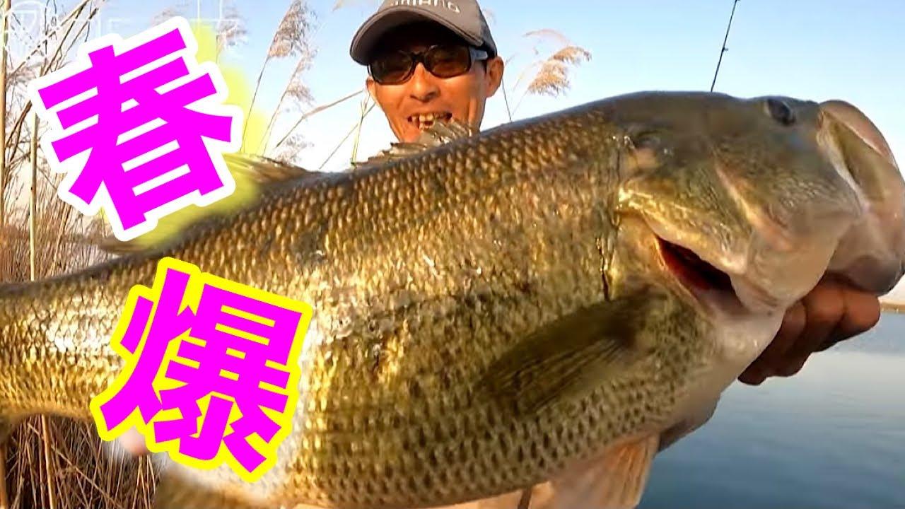【50アップ連打の神回】春のビッグバスはこうやって釣る!!【水の旅# 45】
