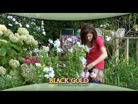 Black Gold Natural Organic