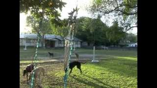 Dog Dude Ranch of Miami, Dog Boarding and Dog Day Care Miami
