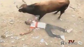 Ужас!!! Быки разодрали десятки людей