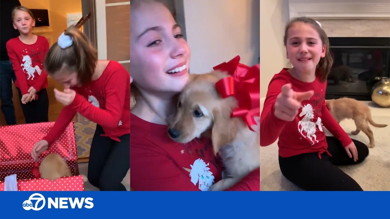 Christmas puppy surprise! Girls cry tears of joy when their wish comes true