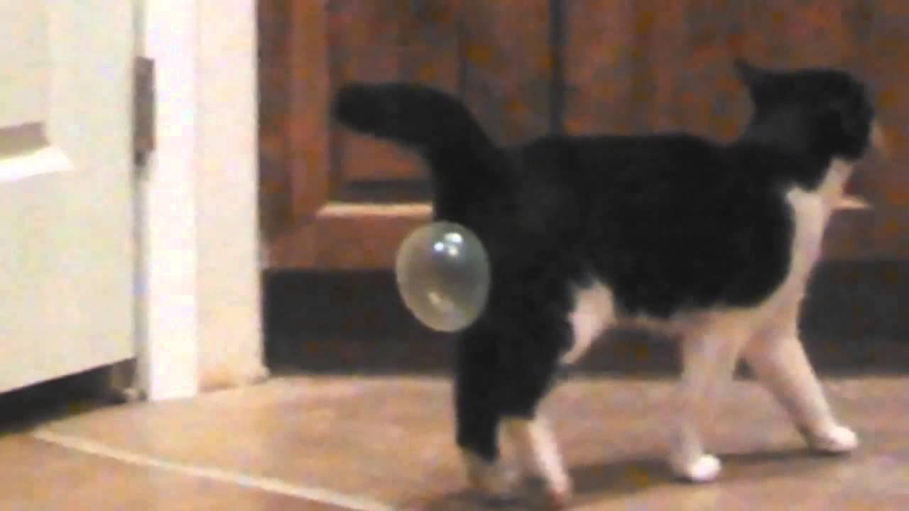 What If A Cat Eats Gum