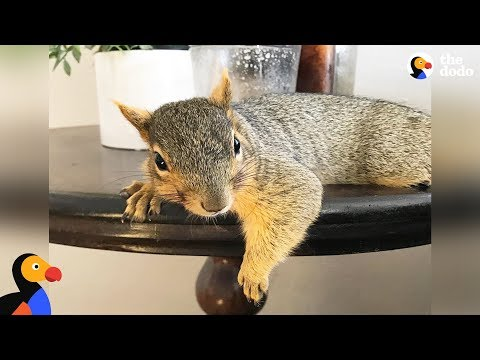 Woman Rescues Baby Squirrel  Then Becomes A Complete Squirrel Mom | The Dodo