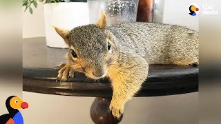 Woman Rescues Baby Squirrel — Then Becomes A Complete Squirrel Mom | The Dodo thumbnail