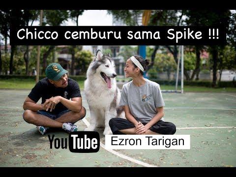 Chicco Jerikho cemburu sama Spike - Ezron Tarigan & Humble Spiker #DailyVlog #4
