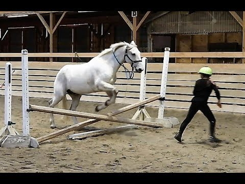 HORSES GONE WILD! Day 275 (10/04/17)
