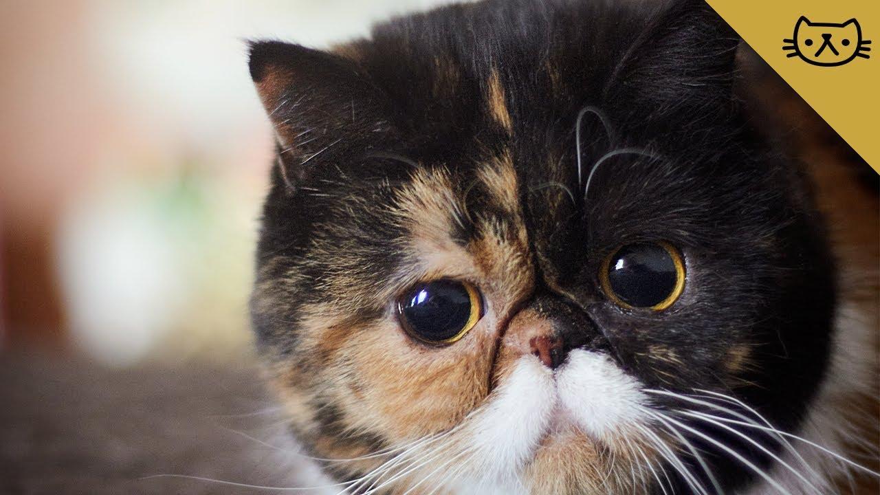 cute cat with big - photo #20
