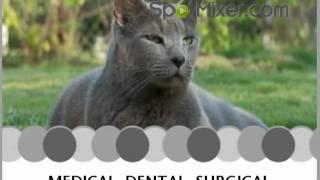 Aussie Animal Hospital Clinic Veterinarian Cutler Bay 33157