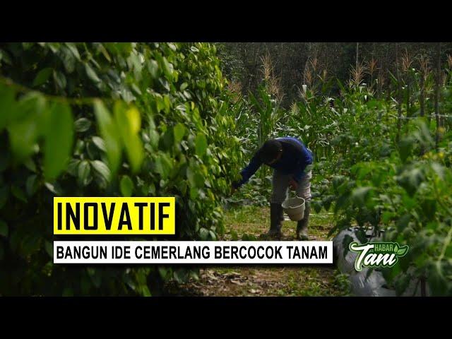 Cerita Sukses Bertanam Dengan Tumpang Sari - Habar Tani