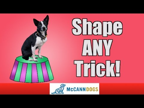 Learn How To Teach The Coolest Dog Tricks Using Shaping