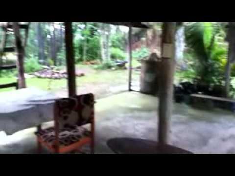 Tropical Rain Fiji