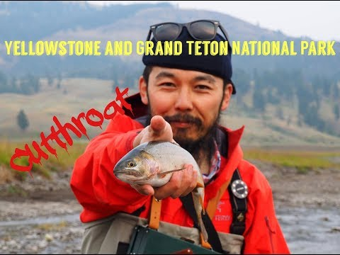 Fly Fishing in Yellowstone & Grand Teton National Park Cutthroat イエローストーンとグランドティトンでフライフィッシング カットスロート
