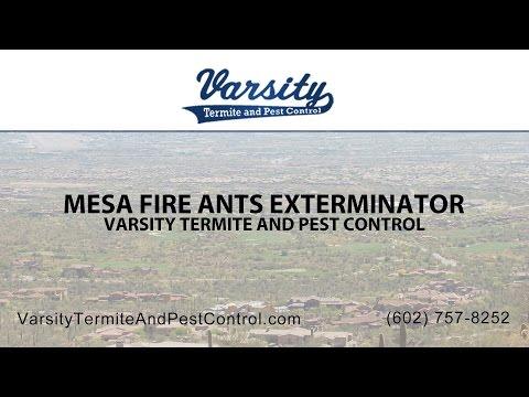 Mesa Fire Ant Exterminators | Varsity Termite & Pest Control