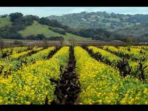 США 2221: о разнице между Северной Калифорнией и Южной - разница есть
