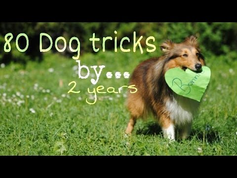 .: 80 Dog Tricks by Sheltie Bonnie | 2 years :.