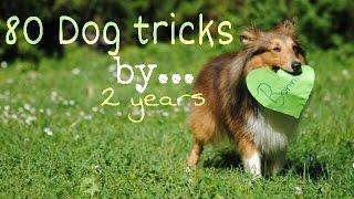 .: 80 Dog Tricks by Sheltie Bonnie | 2 years :.