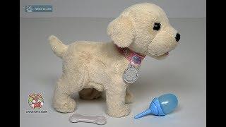 UkraToys.com - Собачка пьющая и писающая - Zapf Baby Born Золотистый Ретривер 817810 - Код-715