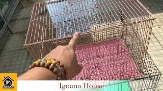 Iguana House Chuồng ( lồng ) nuôi iguana các loại ( iguana cage )