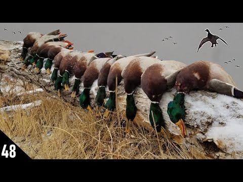 10 AM Three Man MALLARD LIMITS! | 28 GAUGE Mallard Duck Hunting 2021