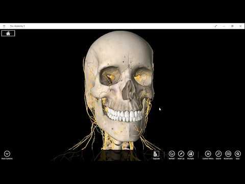 olfactory nerve cranial nerve one 1 pathway neurology anatomy