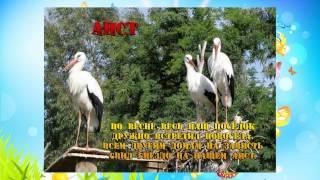 Презентация домашние и дикие птицы. Развивающее видео для детей