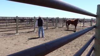 Young Cattlemen