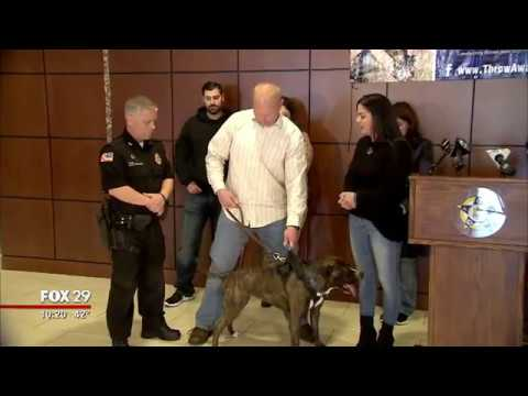 Stray Pit Bull Completes Training To Become Narcotics K9  !!