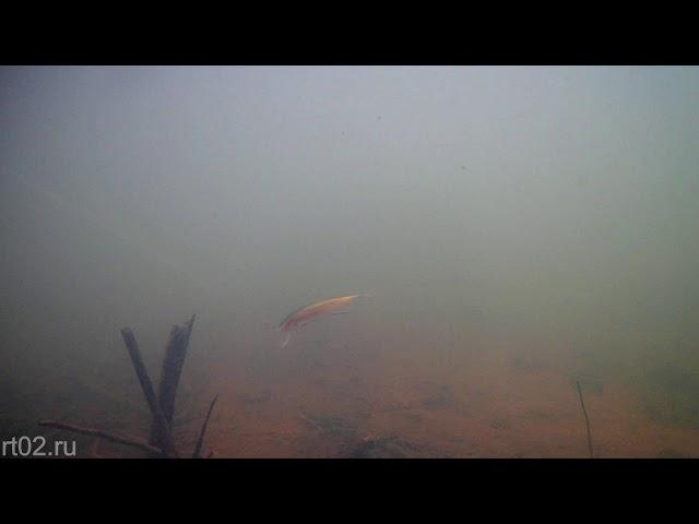 Копия воблера Rapala Husky Jerk от Wdairen (подводная съемка)