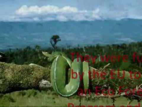 Papua New Guinea Rainforest - YouTube
