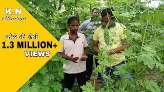 जानिए कब और कैसे करेंगे करेले की खेती तो होगा शानदार लाभ और रोगों  का आना होगा मुश्किल
