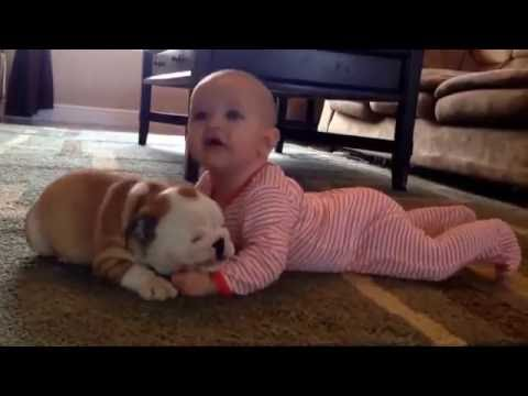 How a Dog Love with a Human 2016 video | 2017 | Dog loving videos 2016 | 2017 | Animal Lovers