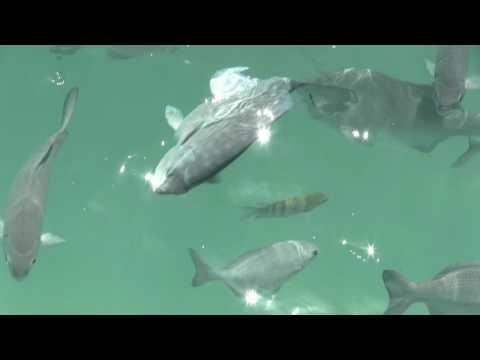 Salt Water Fish @ Barcela Maya Beach Resort - Riviera Maya Mexico