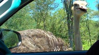 Krüger Nationalpark Selbstfahrer Safari Tag 1 - Südafrika | VLOG #194