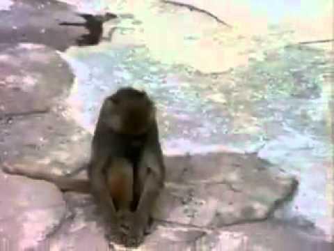 Monyet Kaget Melihat Wajahnya Sendiri.flv