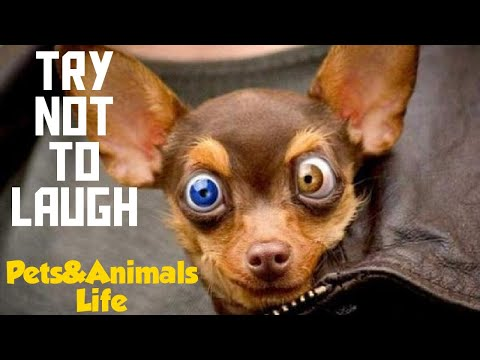 Try Not To Laugh 5 - Pets&Animals Life❤