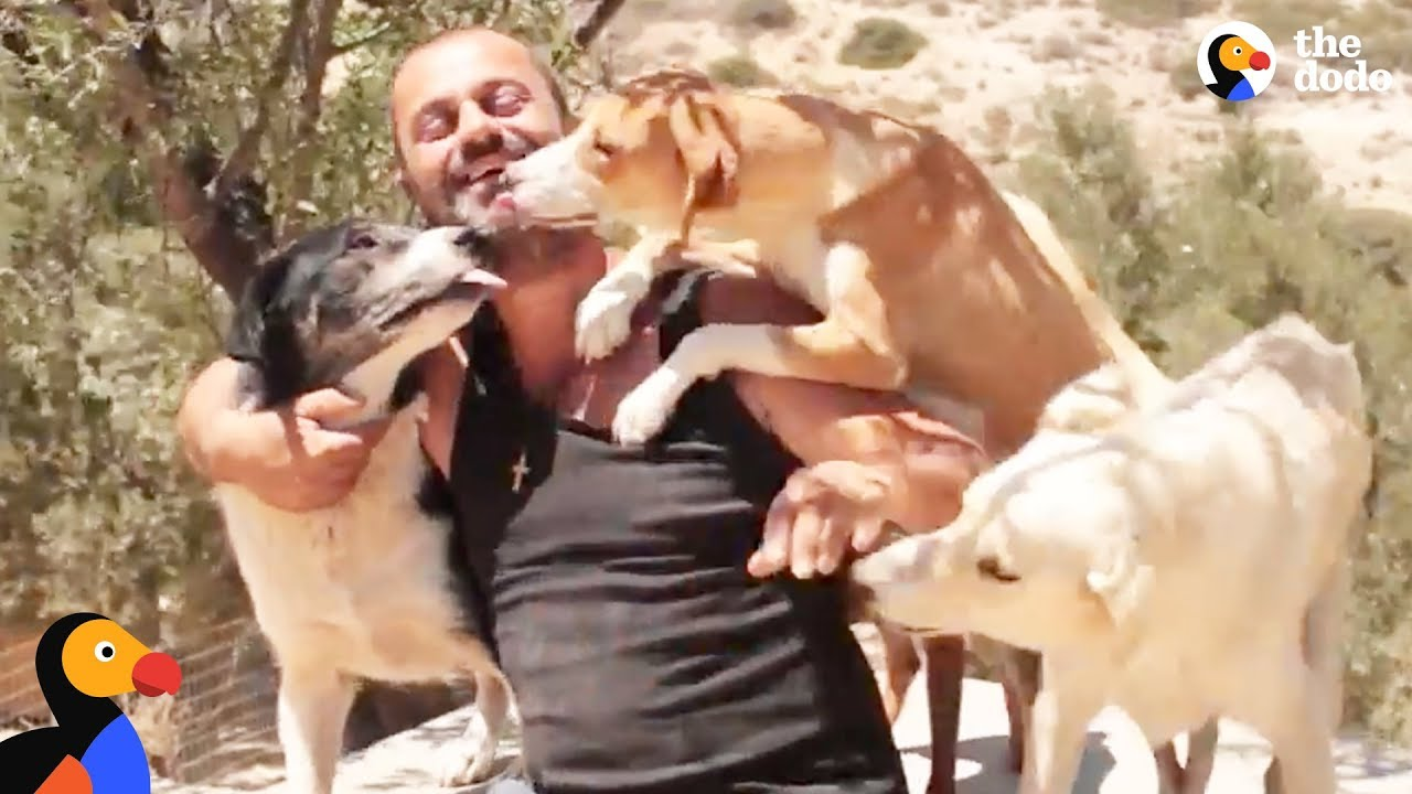 Man Gives Up Everything To Save Stray Dogs | The Dodo