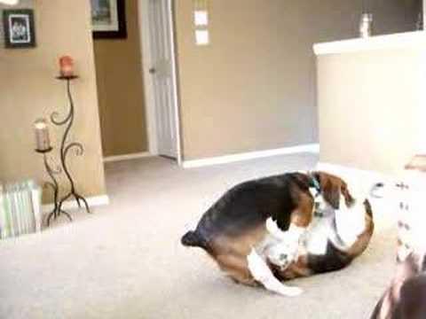 Do Dogs Show Love