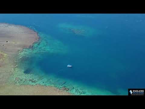 Hewitt Reef