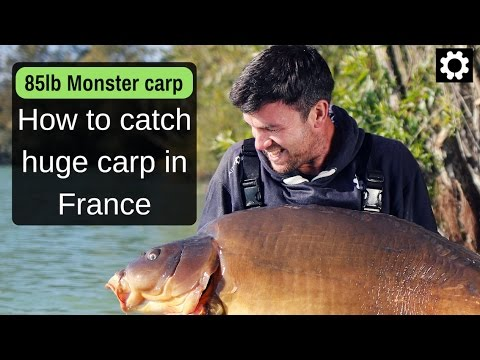 Bait, rigs, tactics for a carp holiday at Gigantica, France.
