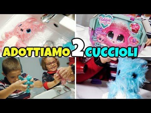 ADOTTIAMO 2 BATUFFOLI CERCA CASA: Cuccioli da Lavare e Coccolare